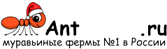 Муравьиные фермы AntFarms.ru - Киров